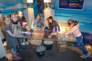 Im SEA LIFE Berlin hat jetzt die erste Archäologiestation eröffnet. Foto: bluesparrow