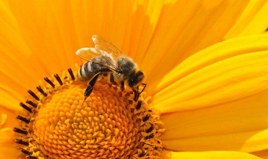 Wildbienen-Ausstellung in der Schiller-Bibliothek