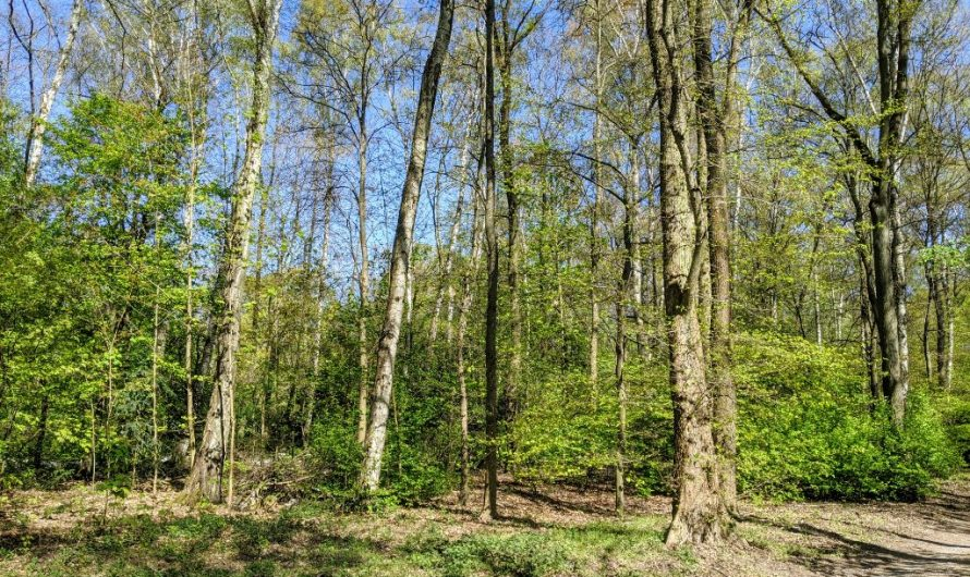 Neuer Waldlehrpfad im Tegeler Forst