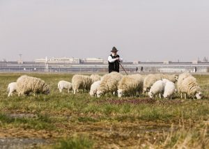 Der erste Schaftag findet am 16. Oktober auf dem Tempelhofer Feld statt.